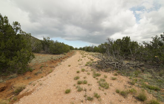 20.55 Acre Buildable Lot in Upscale Subdivision